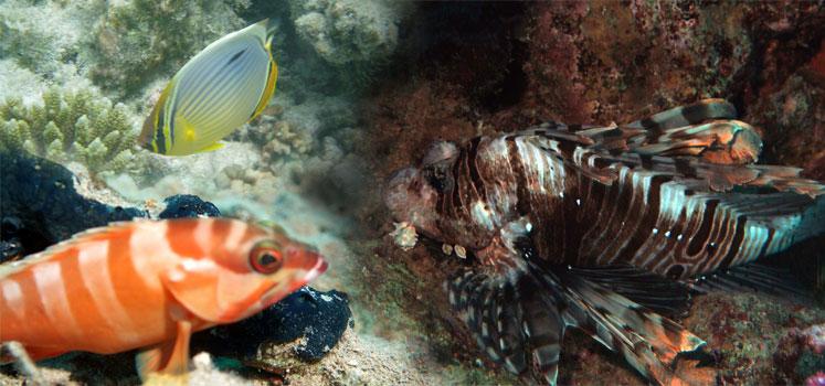 Sri-Lanka-fish