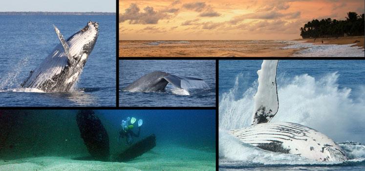 A Whale Good Time in Sri Lanka